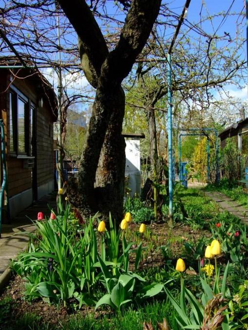Schrebergarten mit Laube im Frühling