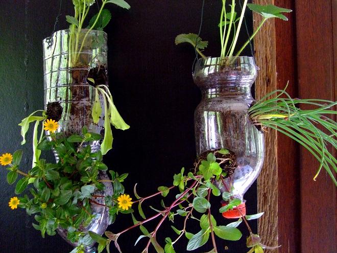 Bepflanzte PET-Flaschen - Frankfurter Beete