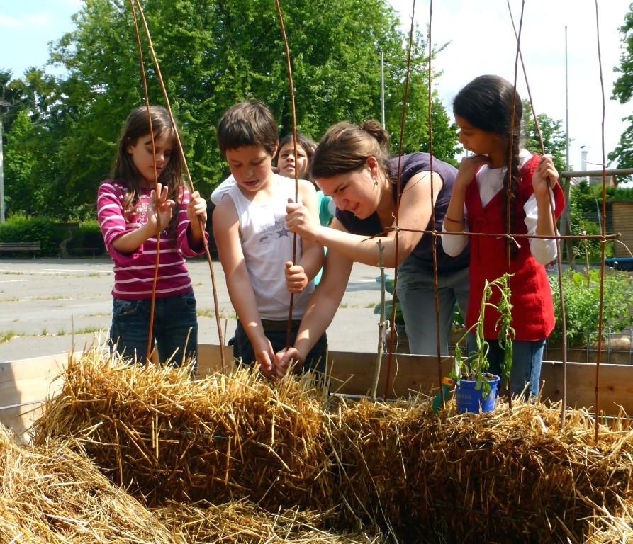 Gärtnern Auf Stroh Macht Schüler Froh - Frankfurter Beete Gaertnern Auf Strohballen Gemuese Pflanzen