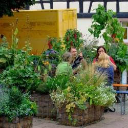 Urban Gardening: Ginnheimer Kirchplatzgärtchen