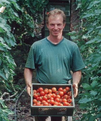 Zukunftsvision: Bio-Tomaten aus Solidarischer Landwirtschaft