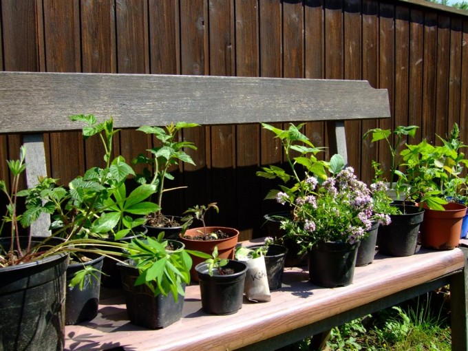 Was können wir von all den Schätzen für unseren Garten gebrauchen?