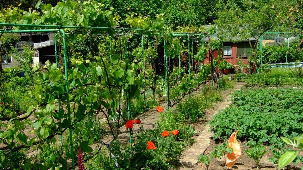 Typischer Kleingarten mit Laube