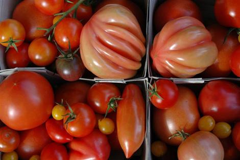 Es lohnt sich Tomaten in ihrer Vielfalt zu erhalten