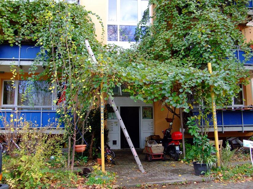 Kiwis als Fassadenbegrünung
