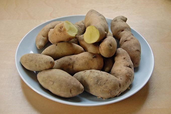 Eine alte Kartoffelsorte gilt heute wieder als Delikatesse: Bamberger Hörnchen