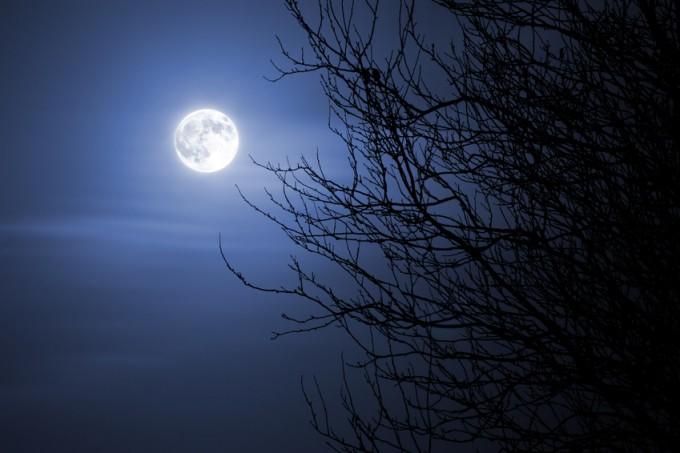 Den besten Zeitpunkt zum Säen und Pflanzen nach dem Mondkalender bestimmen