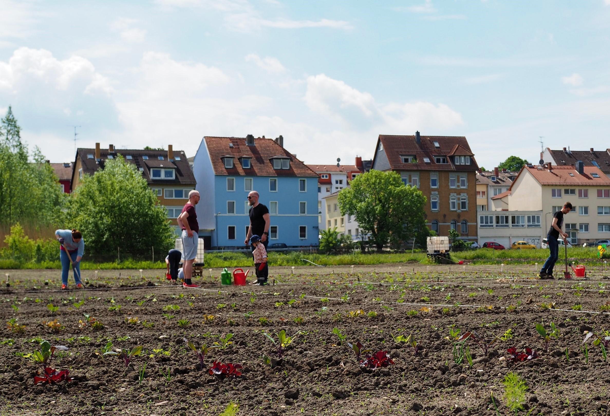 Ackerparzellen der Oberräder Krautgärten