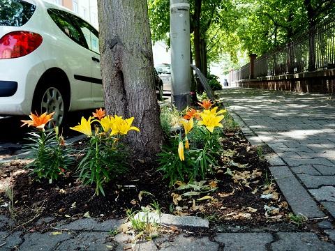 Von Eltern und Schülern bepflanzte Baumscheibe vor der Frankfurter Comeniusschule