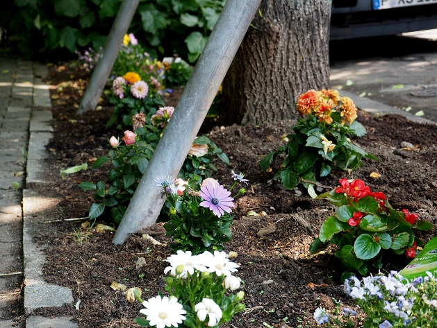 Guerilla Gardening verschönert den Schulweg