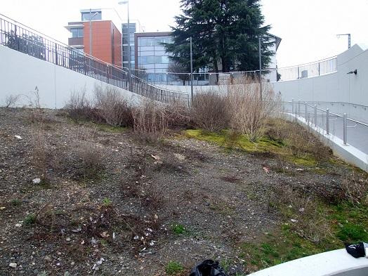 Öde Fläche am Rödelheimer S-Bahnhof vor der Bepflanzung