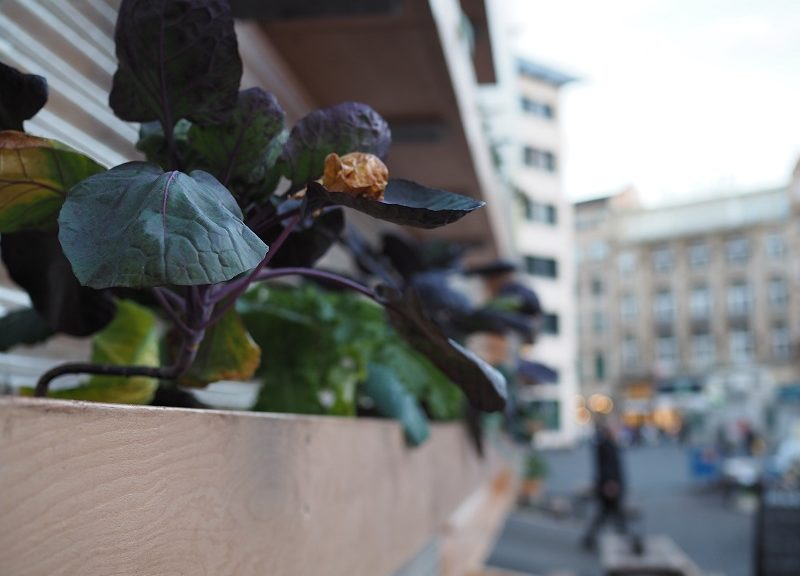 Urban Gardening Frankfurt: Zukunftspavillon