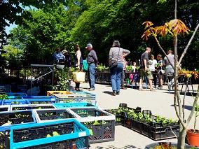 Pflanzenbörse @ Botanischer Garten | Frankfurt am Main | Hessen | Deutschland