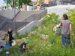 Naturnah gärtnern - Bahnhofsgrün Rödelheim