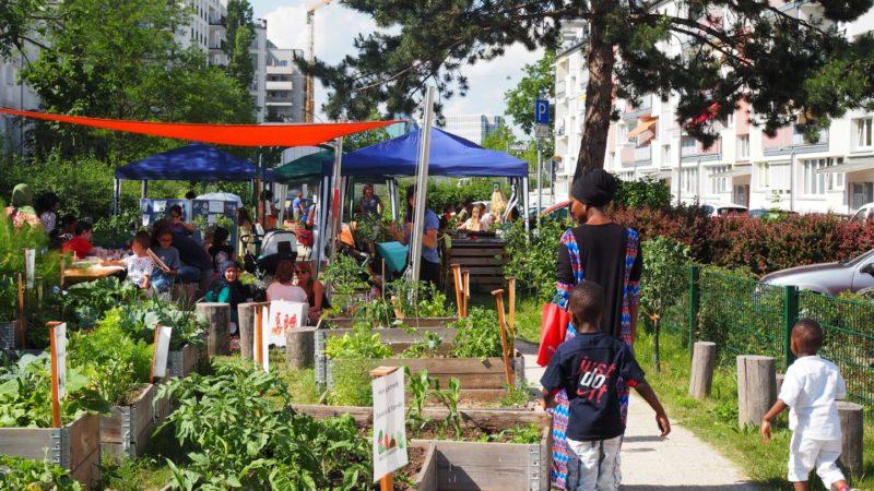 Urban Gardening Frankfurt: Gallus Garten