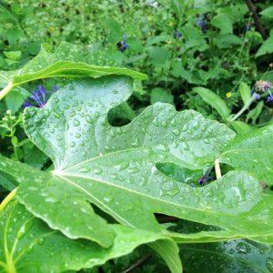 Pflanzen besser von unten gießen