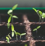 Mit Pflanzen dem Klimawandel begegnen @ Kinder im Zentrum-Gallus e.V. Mehrgenerationenhaus Frankfurt | Frankfurt am Main | Hessen | Deutschland