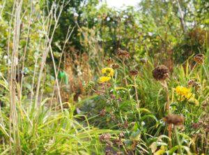 Ökologische Vielfalt im Permakulturgarten
