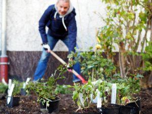 Bepflanzung eines Staudenbeets im Vorgarten