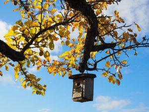 Nistkastenbauaktion Wohnraum schaffen @ NABU-Garten Friedberg