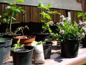 Pflanzen-Tauschbörse des Gallus Garten @ Gallus Garten