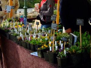 Verkaufsstand mit Pflanzen