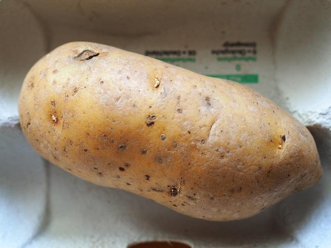 Kartoffel direkt nach dem Brechen der Keimruhe - aus den Augen treiben erste Spitzen neuer Keime aus.