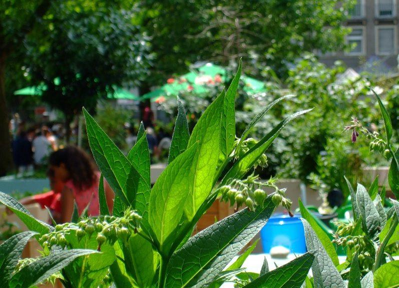 Pflanzen und Menschen - Wiedereröffnung Neuer Frankfurter Garten