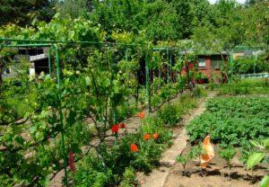 Stadtspaziergang: Ästhetik & Funktion der Kleingartenanlage @ Bockenheim