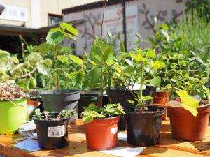 Pflanzentauschbörse & Urban Gardening Tag @ Klimawerkstatt | Frankfurt am Main | Hessen | Deutschland