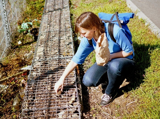 Ablegen einer Samenbombe in eine Gabione am Wegesrand