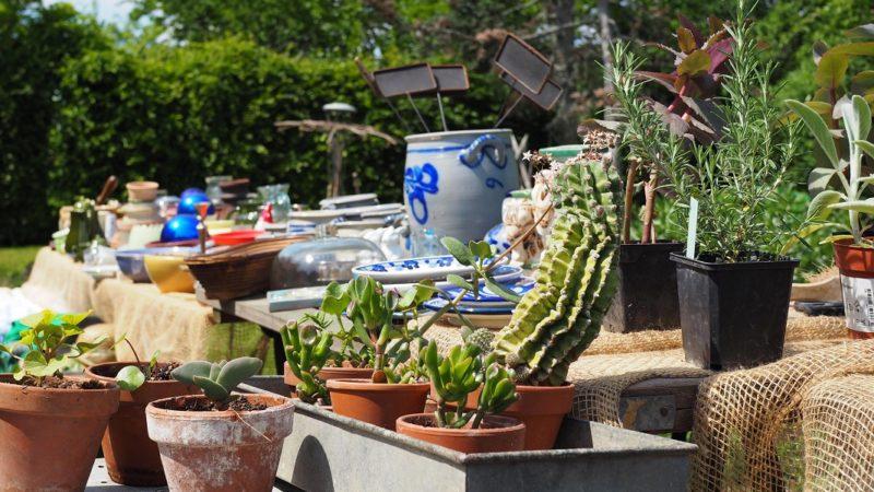 Pflanzen und Gefäße auf dem Gartenflohmarkt