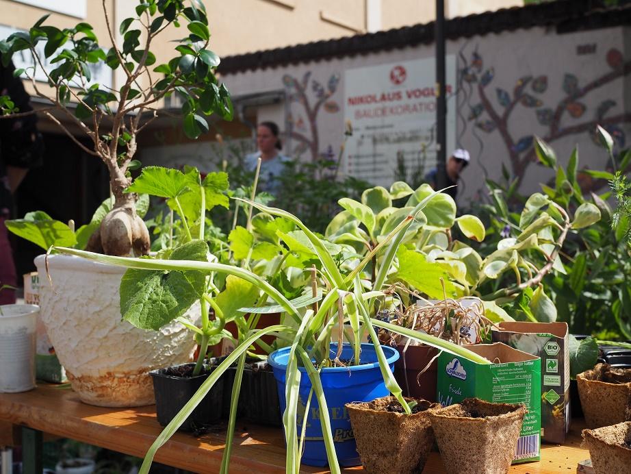 Buntes Sammelsurium von Töpfen mit Pflanzen, die auf Abnehmer warten.