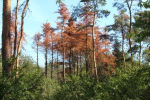 Rettet den Stadtwald! @ nahe Carl-von-Weinberg-Park