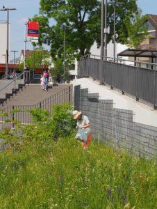 Mehr Biodiversität in der Stadt: Für alle, mit allen? @ Frankfurter Palmengarten
