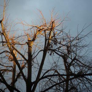 Stadtnatur-Spaziergang zur Blauen Stunde @ Ginnheim