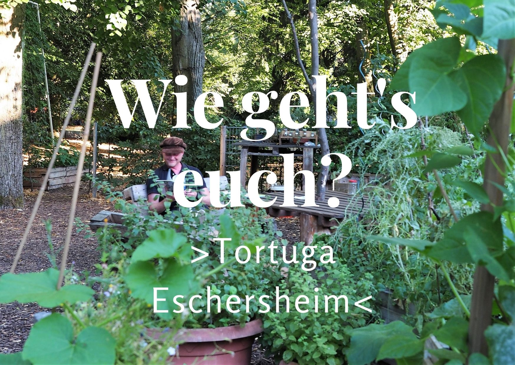 Gemeinschaftsgarten Tortuga in Frankfurt