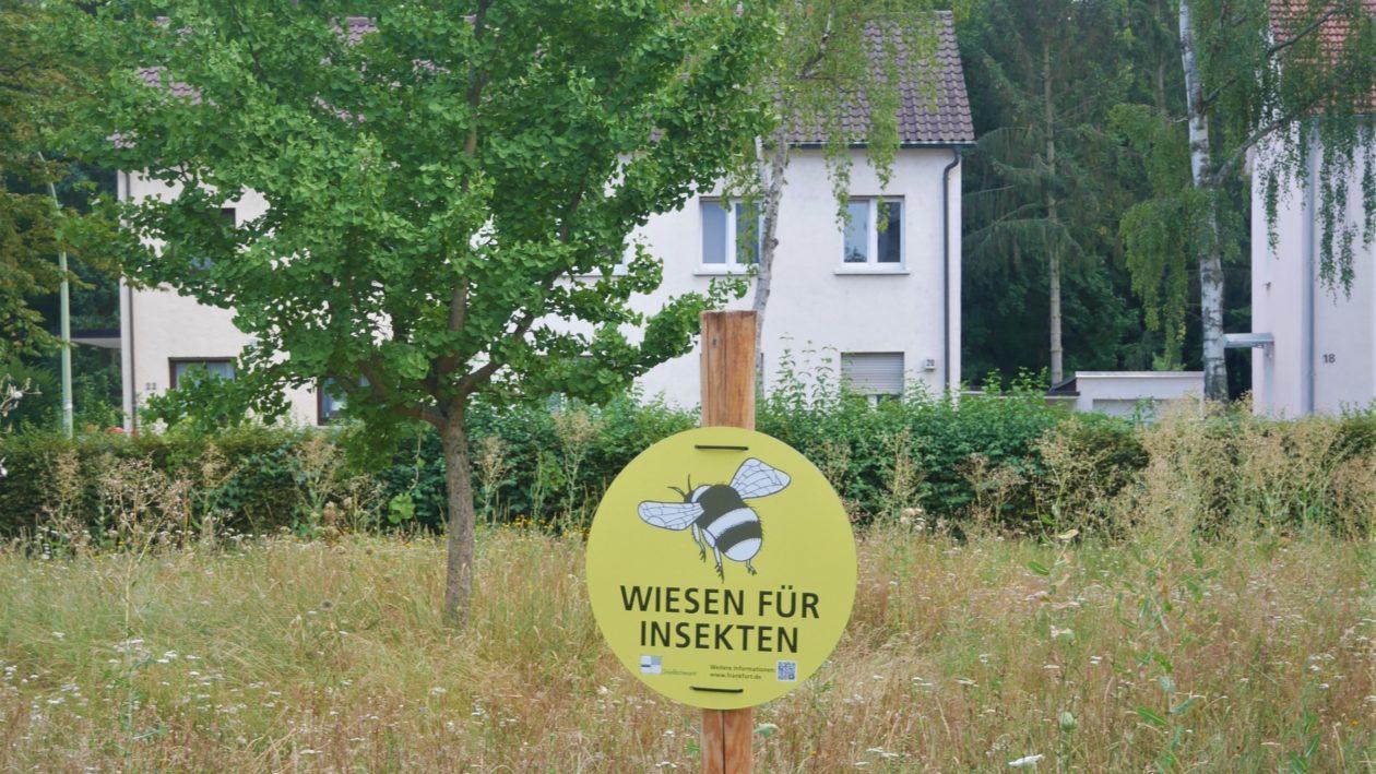 Wildblumenwiese am Johanna-Tesch-Platz